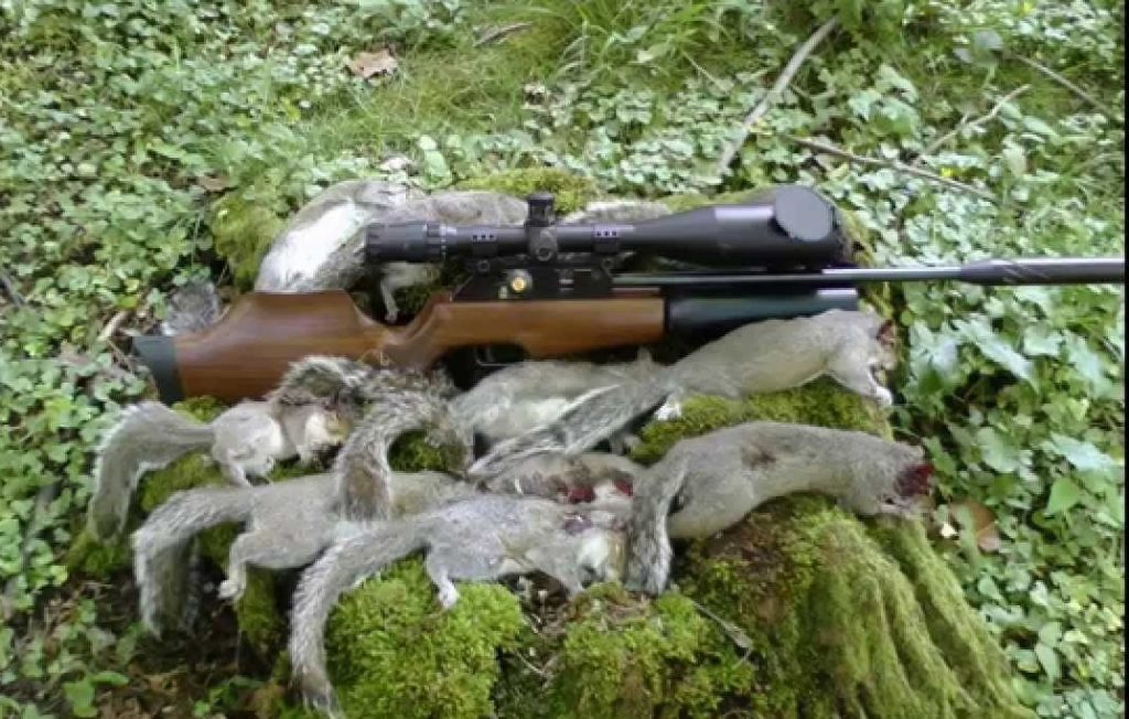 air rifle for pest control